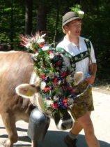 Viehscheid in Oberstdorf