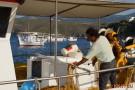 Fischer im Hafen Linaria