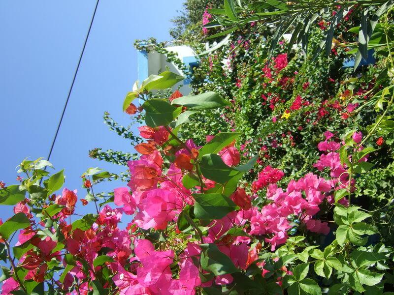 Blütenpracht auf Agathonisi