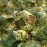Unterwasser Fotogalerie -Eintritt in eine fremde Welt