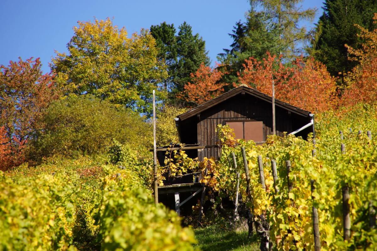 Radtour zwischen Schurwald und Remstal -Wengerterhütte