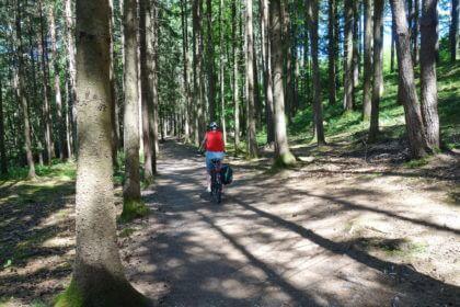 Waldweg am Hartsee
