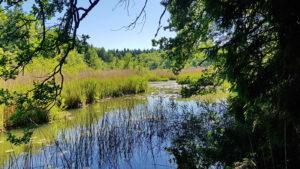 Entlang der Achen zwischen Hart- und Pelhamer See