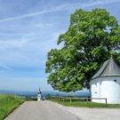 Radtour zwischen Chiemsee und Simssee 'Von Baum zu Baum'