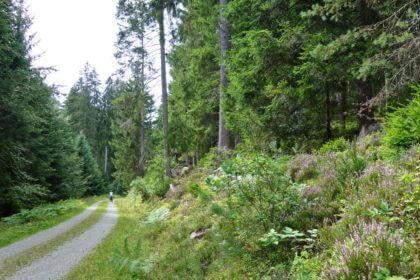 Radweg Kleine Enz