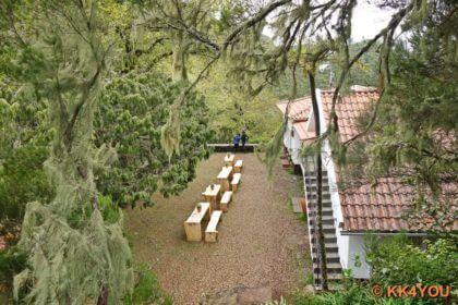 Forsthaus Rabaçal, Flechtenbehangene Lorbeerbäume