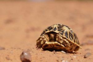 Schildkröte auf der Pad