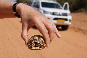 Schildkröte retten!