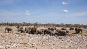 Pirschfahrt rund um Namutoni -reger Betrieb am Groot Okevi Wasserloch