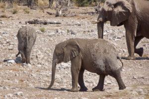 Elefanten Kindergarten