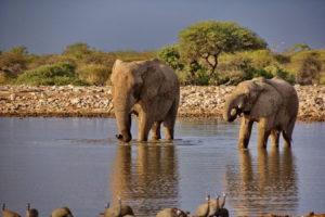 am Wasserloch Klein Namutoni