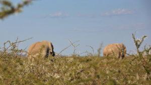 Elefantenbullen im Busch