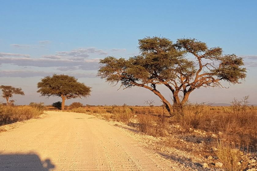 Abschied vom Etosha Park