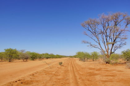 Damaraland  -Landschaft wird grüner