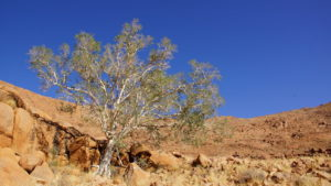 Einsamer Baum in den Tirasbergen