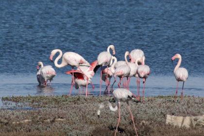 Flamingos in der Lüderitz Bay