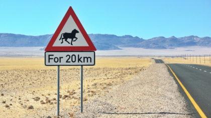 20 km Wildpferde