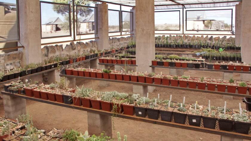 Blick ins Lithoparium der Lodge Alte Kalköfenmit mit tausenden von Pflanzen