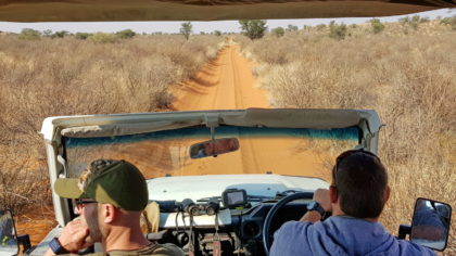 Löwen-Tracking, Pirschfahrt mit David