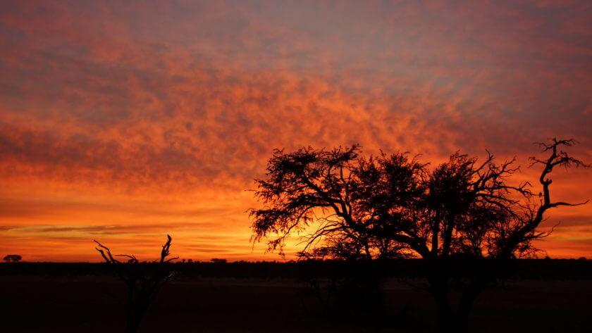 Sonnenaufgang am Nossob-Wasserloch