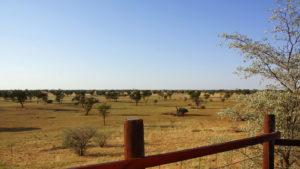 Blick von der Terrasse auf die Kalahari
