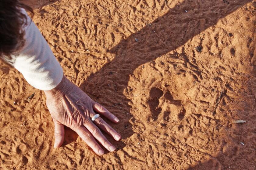 Nächtlicher Besuch, Spur eines Leoparden vor unserem Zelt