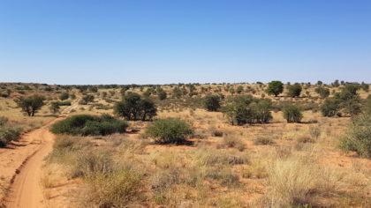 4x4 Trail von Gharagab Richtung Nossob