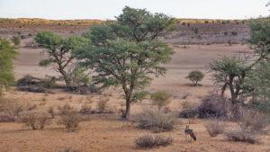 Kalahari Tended Camp, Blick von der Terrasse