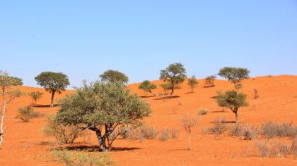 Kalahari Impression