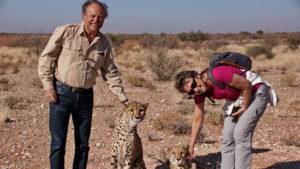 Cheetah Encounter auf Lapa Lange