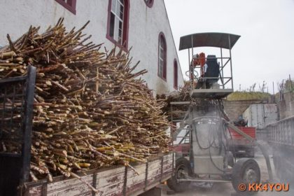 Anlieferung des Zuckerrohrs