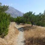 Wanderweg von Diafani nach Olymbos