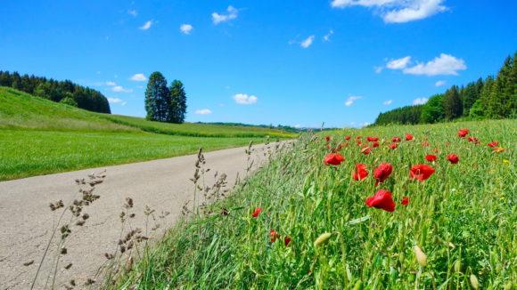Wiesensteiger Radtour über die Alb lphöhe